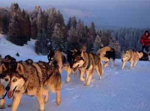 sport hiver la plagne chien